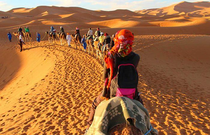 camel convoy