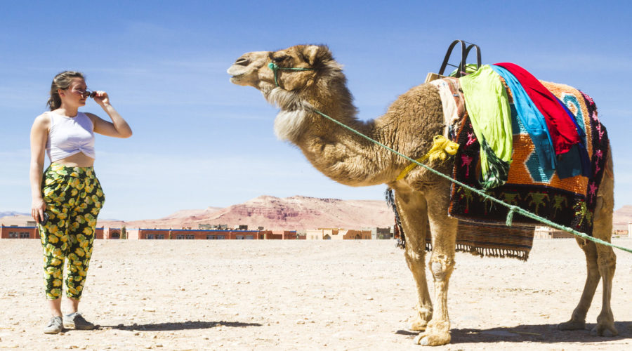 camel and visitor