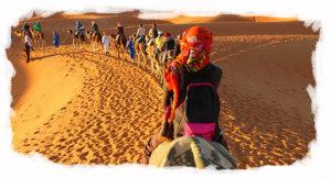 camel convoy travel link morocco
